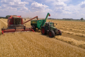Getreide Anbau und Ernte